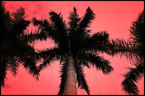 Pink / Orange