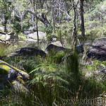 06 Viajefilos en Australia. Cathedral Rock NP 12