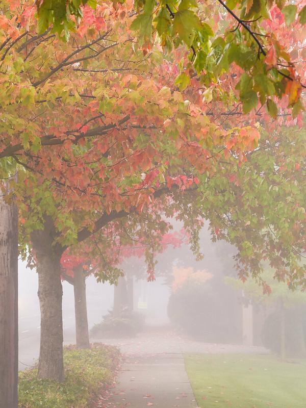 Foggy Autumn Sidewalk