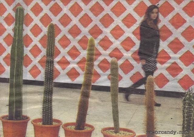 Cactus Plants (3)