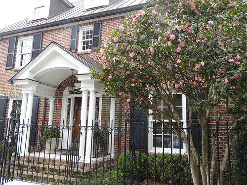Old Charleston house with pink camellias.