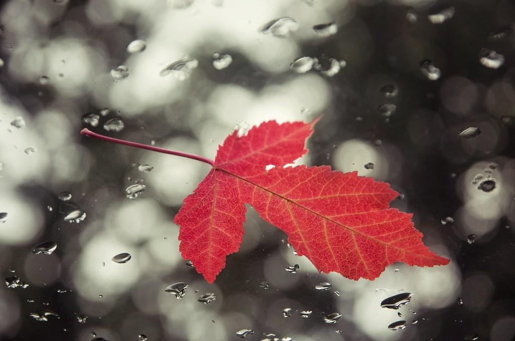 Bokeh Leaf 3