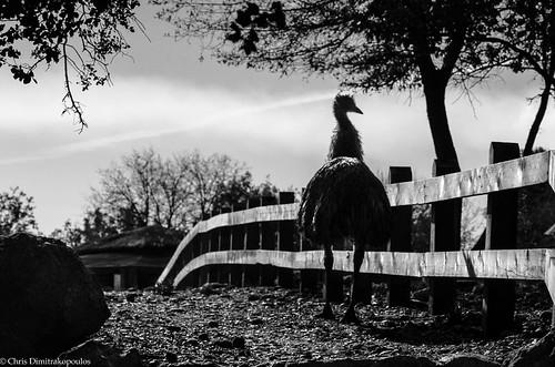 Emu by s1nano