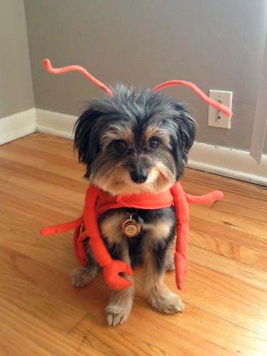 Walter the lobster