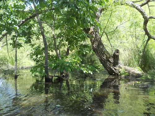 Kayaking on Lake Orange