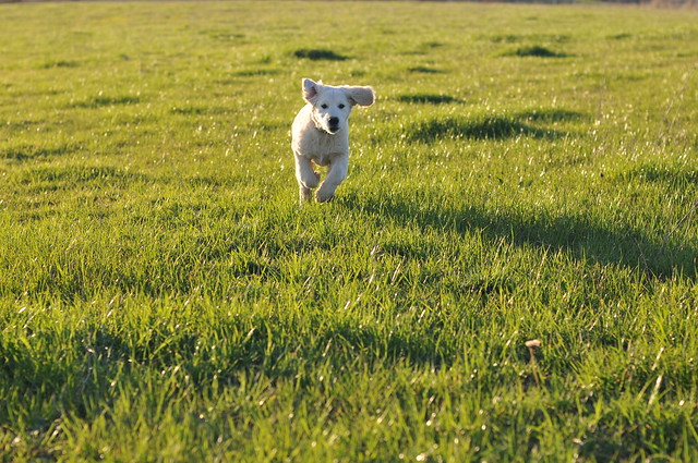puppy charge and green grass