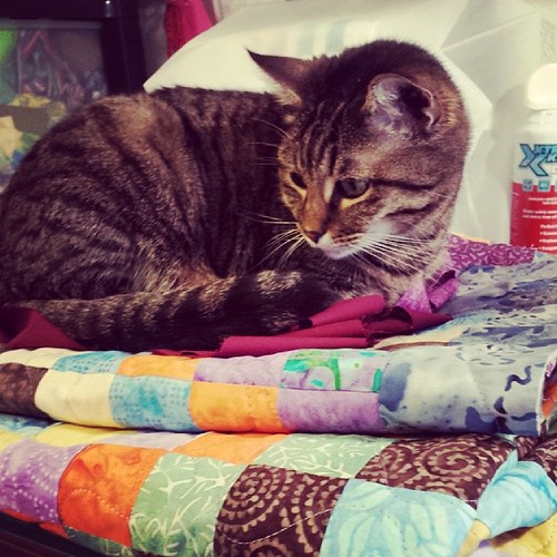 @clumsykristel, Marie approves of your quilts!  #blanketcharity #kitty