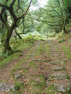 Granite sleepers, Dewerstone Woods