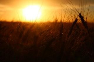 Sunset lovin'.