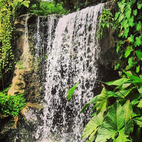 #waterfall at #singapore botanic gardens by @MySoDotCom