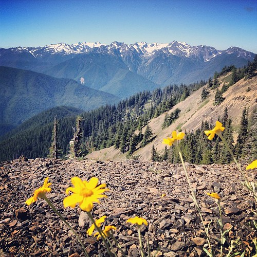 Olympic National Park - Washington State by @MySoDotCom