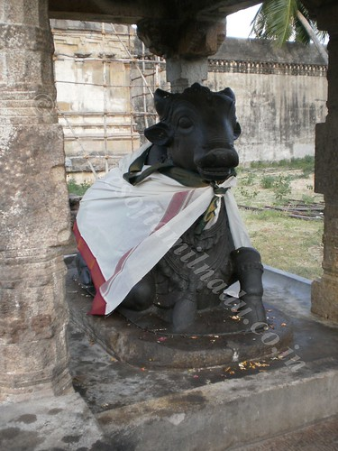 Nandi in the outer Praharam. Thiruvisanallur, Sivayoginathar Temple