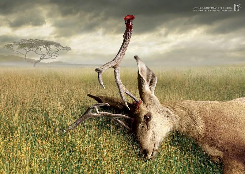 Wildlife-Friend-Foundation-Thailand-Antlers