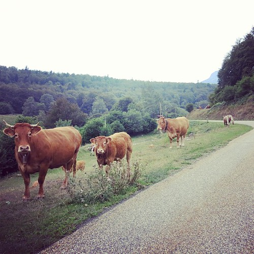 I was alone. Very quiet road in Pyrénées... but there were so many great supporters cheering me up with ringing cow bells ♡