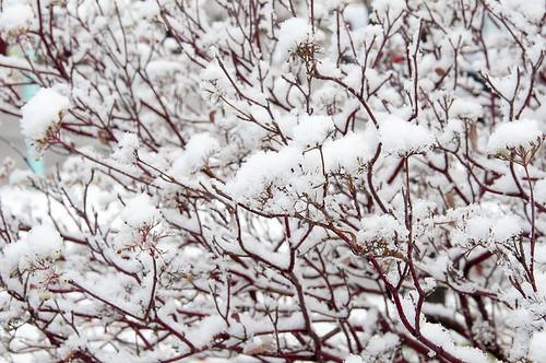 First Snow 7