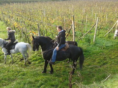 Cavalli in Valtenesi