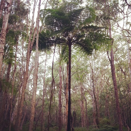 Fern tree by andrewgillsag
