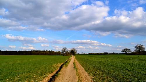 Pathway by Nicki Ki