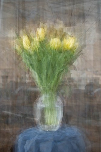 tulips in the round by Stephen D'Agostino
