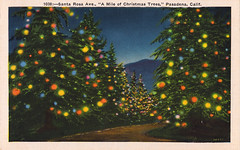 pasadena mile of christmas trees