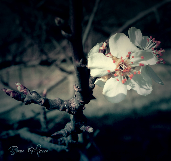 Fleur dans un arbre