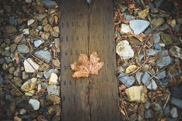 leaf.