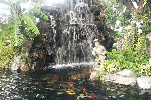 waterfall and fishes