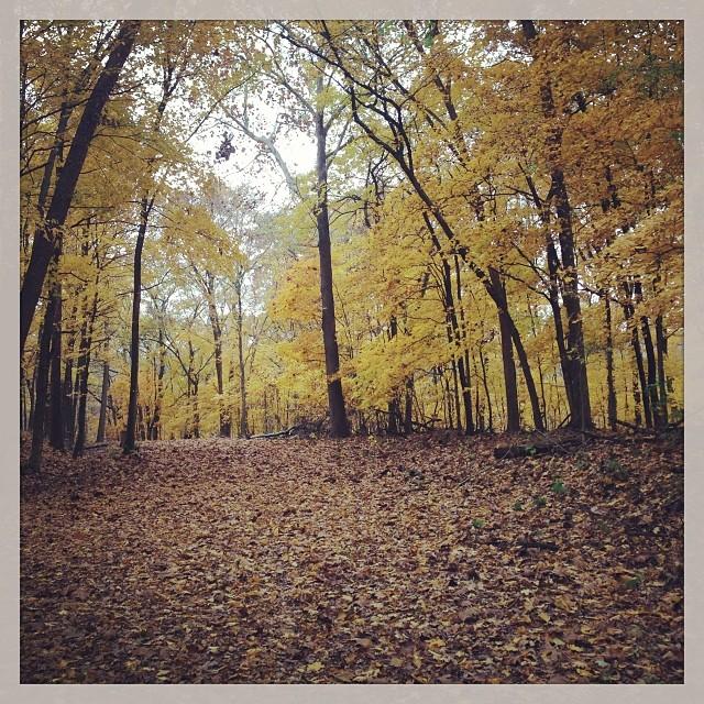 More fall colors. #ridinggravel #fall