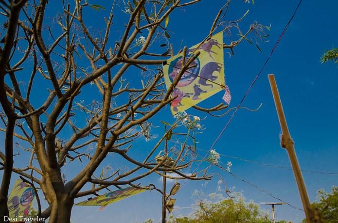 kite stuck in a tree