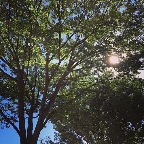 夏やわー。