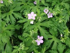 PBP plants