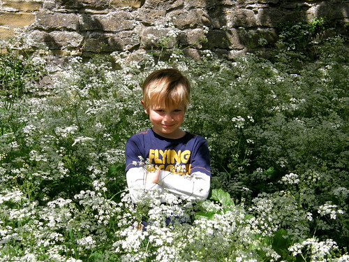 S amongst the Cow Parsley