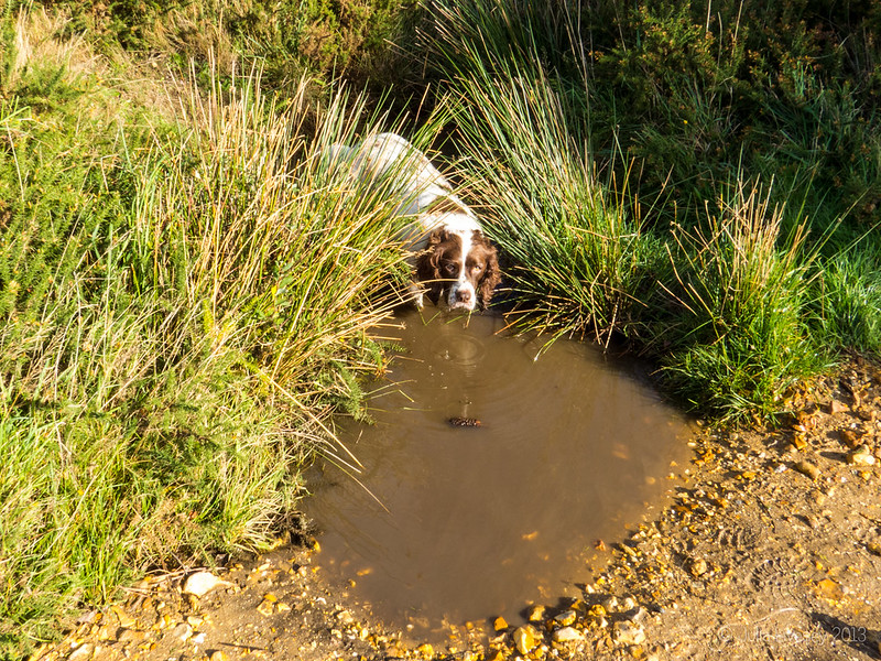 Anothe day, another puddle