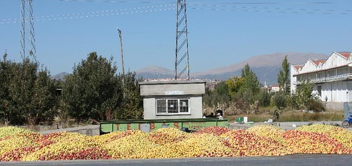 20131011_7112_apples_Small