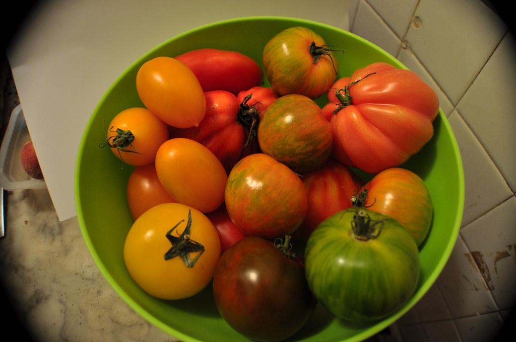 Tomates Multicolores_1