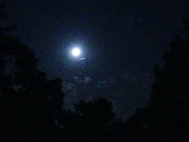dang, that moon sure is big #project365
