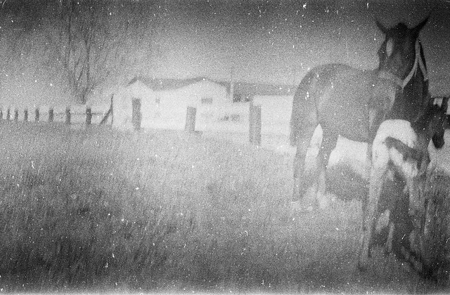 Found Film - Horse Farm