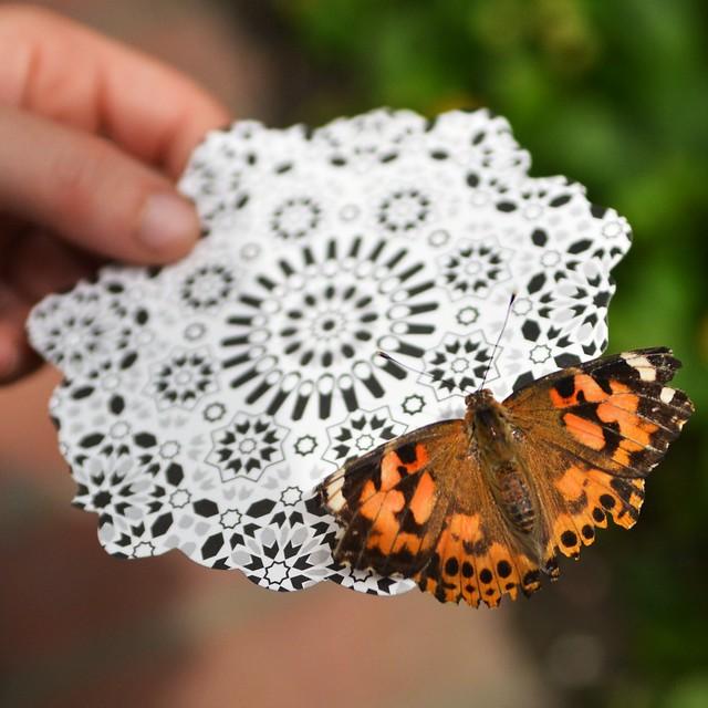 Butterfly #6