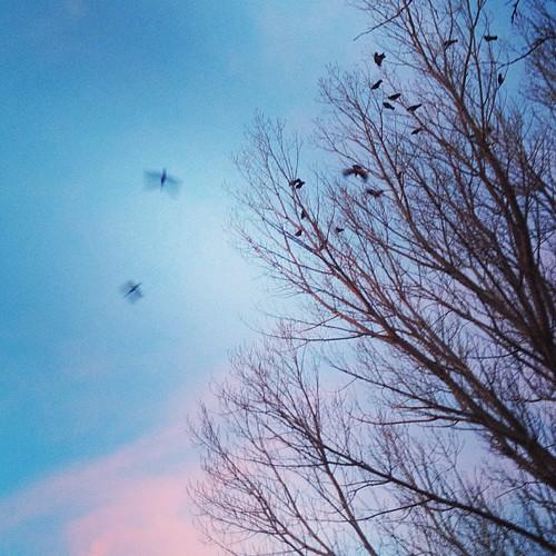 Birds are noisy this morning by @MySoDotCom