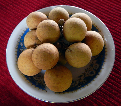 Longan-tasting growing in an orchard by the Mekong