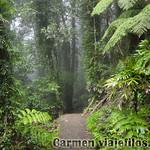 07 Viajefilos en Australia. Dorrigo Rainforest NP 18