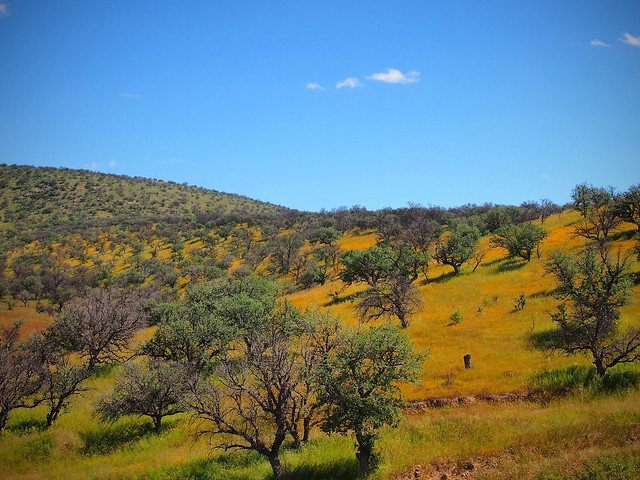 Road to Namiquipia