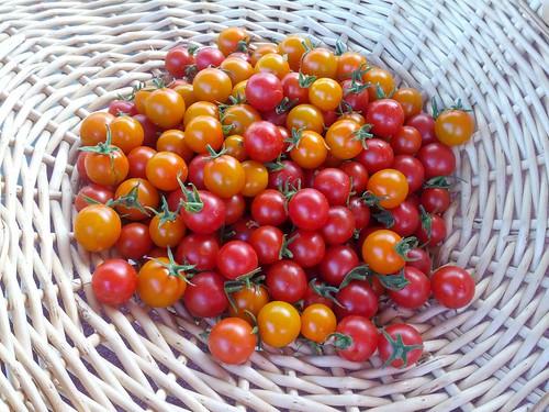 CherryTomatoBasket