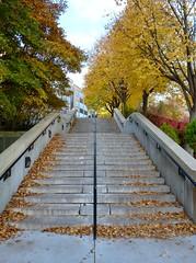 Steps near Conte Forum