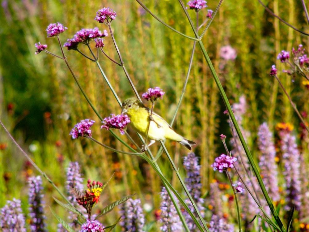 Wildlife in the Garden (4/6)