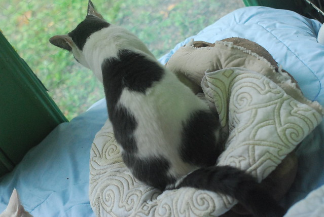 goathouse cat refuge