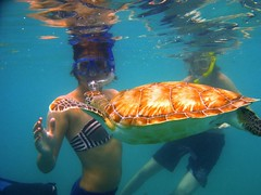 Culebra Snorkeling with Turtles