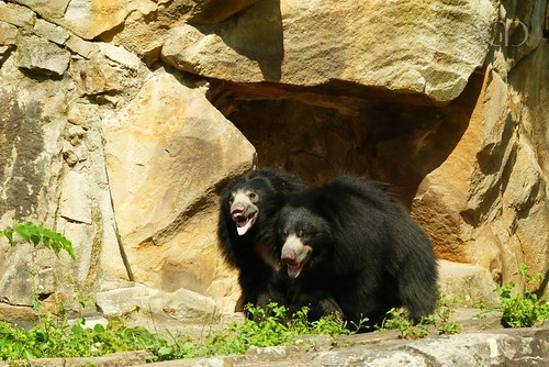 The bears obviously enjoy the enclosure!