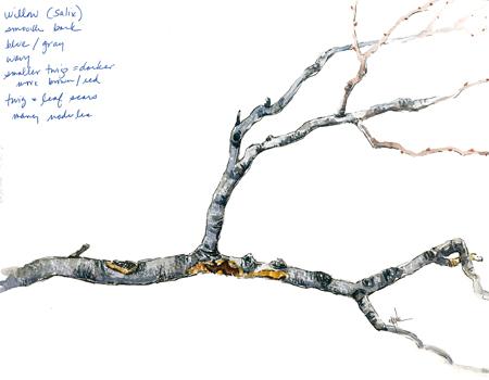 branch_final_step8