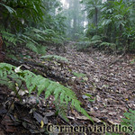 07 Viajefilos en Australia. Dorrigo Rainforest NP 20